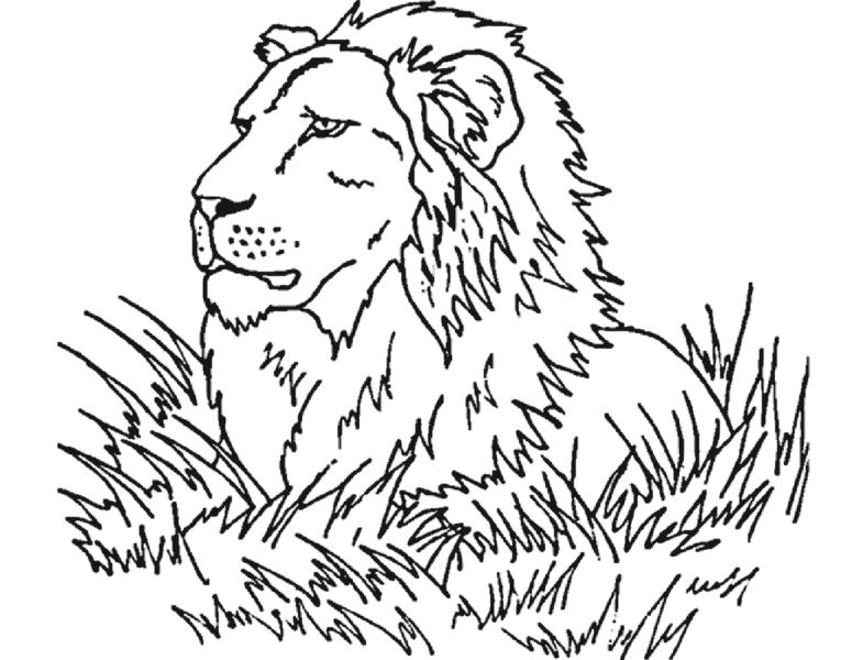 Tranh tô màu con sư tử đẹp nhất cho bé tập tô (9)