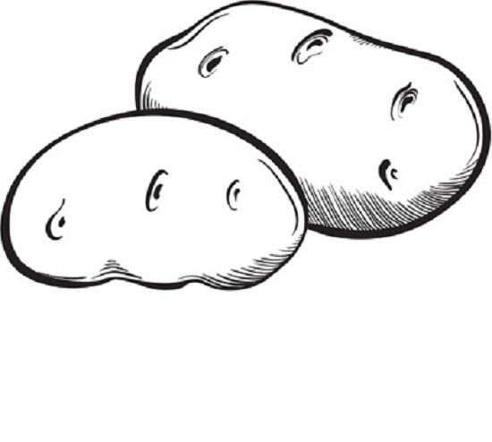 Tranh tô màu củ khoai lang đơn giản cho bé tập tô (22)