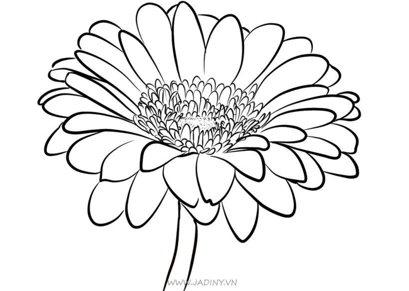 Tranh tô màu hoa cúc cho bé tập tô
