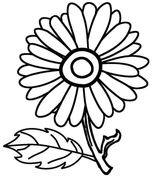 Tổng hợp các bức tranh tô màu hoa cúc ý nghĩa nhất