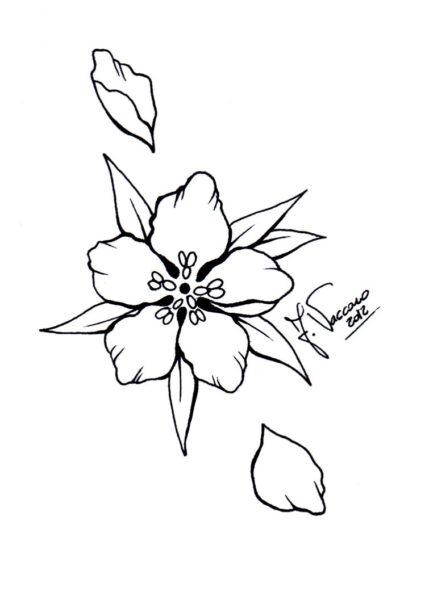 Tranh tô màu hoa mai đẹp cho bé tập tô (12)