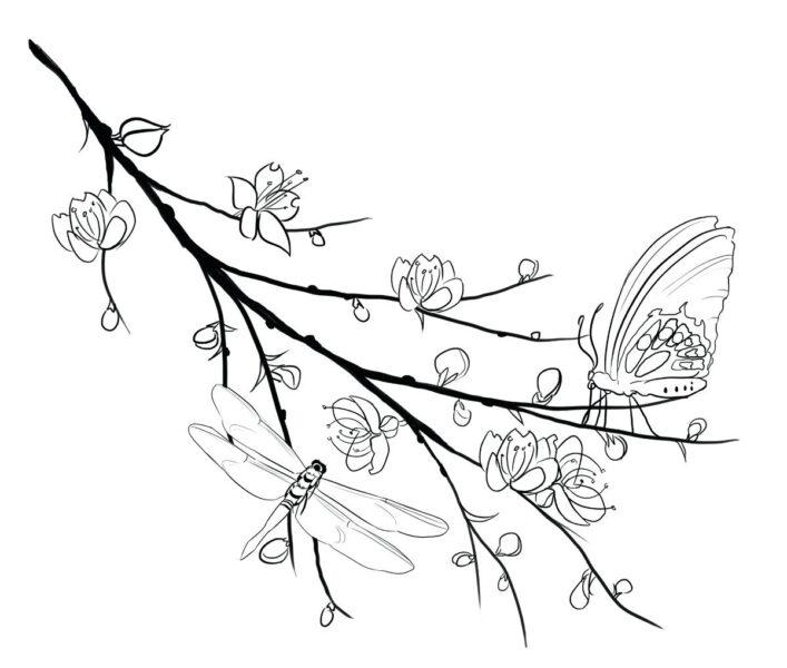 Tranh tô màu hoa mai đẹp cho bé tập tô (13)