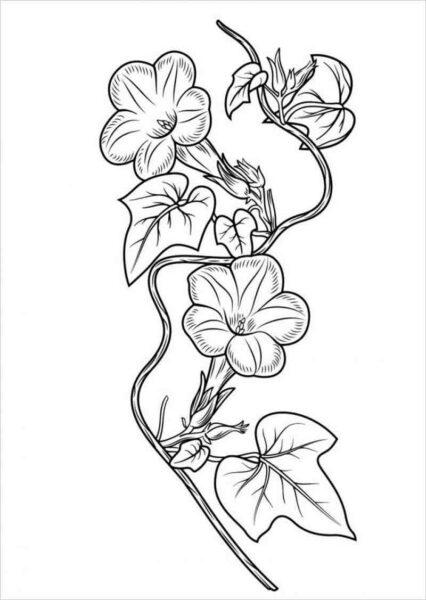 Tranh tô màu hoa mai đẹp cho bé tập tô (17)