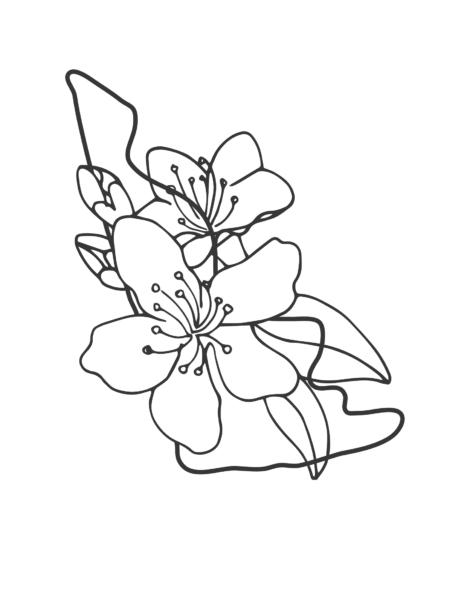 Tranh tô màu hoa mai đẹp cho bé tập tô (2)