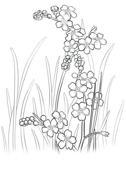 Tranh tô màu hoa mai đẹp cho bé tập tô (3)
