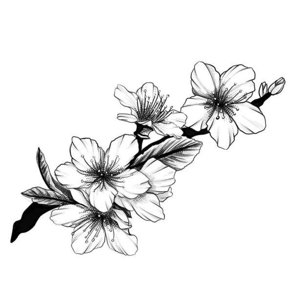Tranh tô màu hoa mai đẹp cho bé tập tô (5)