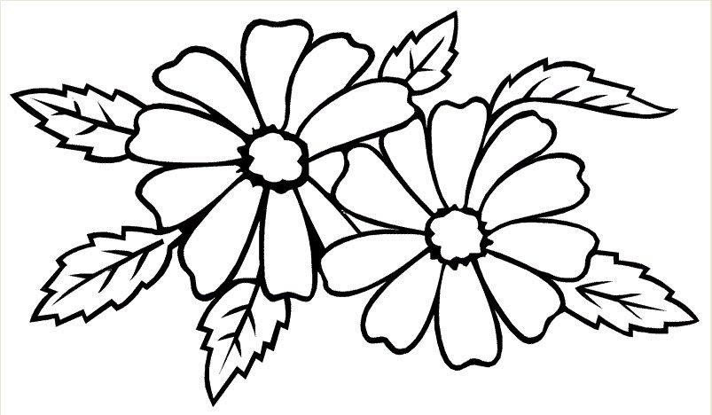 Tranh tô màu hoa mai đẹp cho bé tập tô (6)