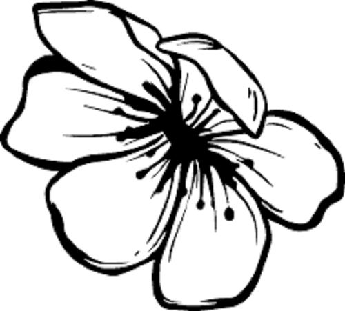Tranh tô màu hoa mai đẹp cho bé tập tô (7)