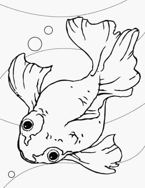 Tranh vẽ chưa tô màu chú cá vàng đẹp nhất cho bé tập tô (6)