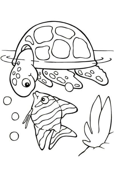 Tranh vẽ chưa tô màu con rùa đẹp cho bé tập tô (3)
