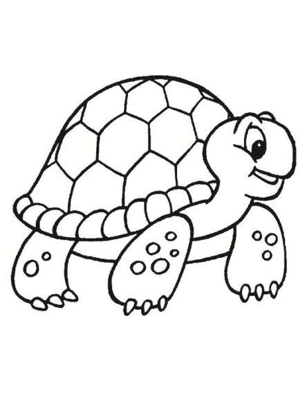 Tranh vẽ chưa tô màu con rùa đẹp cho bé tập tô (4)