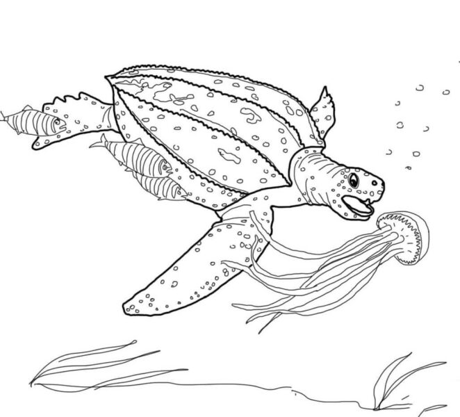 Tranh vẽ chưa tô màu con rùa đẹp cho bé tập tô (5)