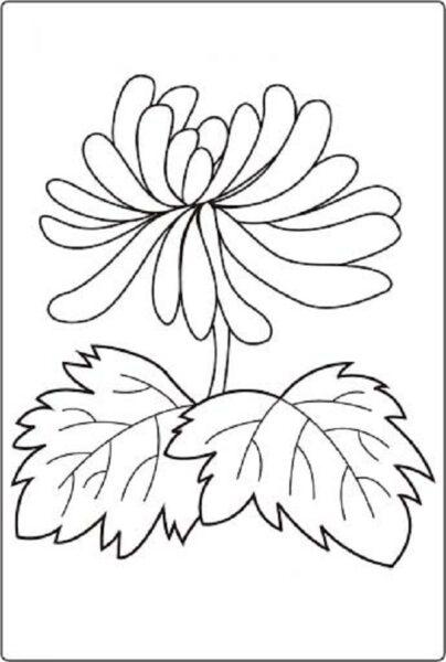 Tranh vẽ chưa tô màu hoa cúc cho bé tập tô (4)