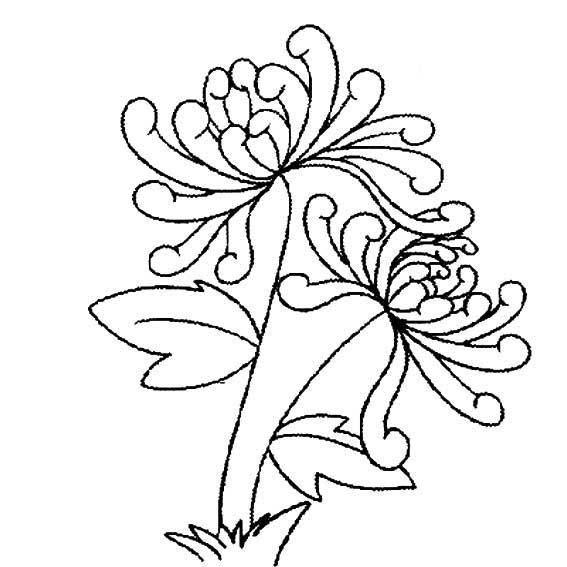 Tranh vẽ chưa tô màu hoa cúc cho bé tập tô (5)