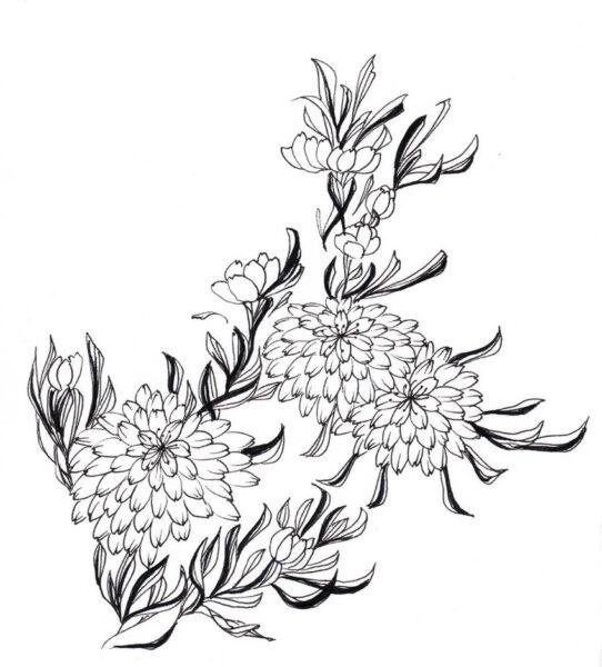 Tranh vẽ chưa tô màu hoa cúc cho bé tập tô (7)