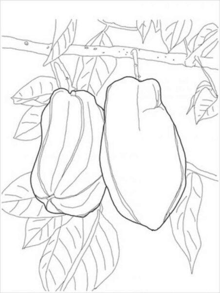 Tranh vẽ chưa tô màu quả đu đủ đẹp cho bé tập tô (7)