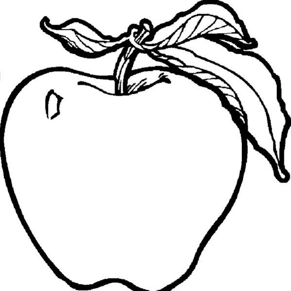 Tranh vẽ chưa tô màu quả táo cho bé tập tô (4)