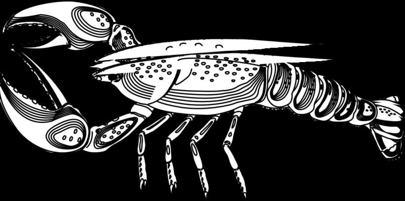 Tranh vẽ đen trắng con tôm cho bé tô màu (2)