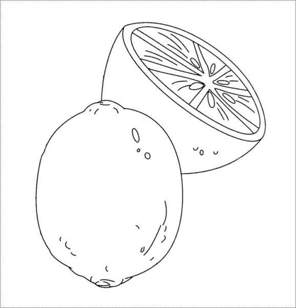 Tranh vẽ quả cam cho bé tô màu (5)