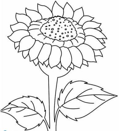 Vẽ hoa hướng dương