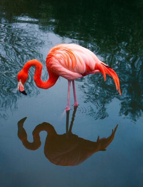 hình ảnh chim hồng hạc được các nhiếp ảnh chụp nghệ thuật