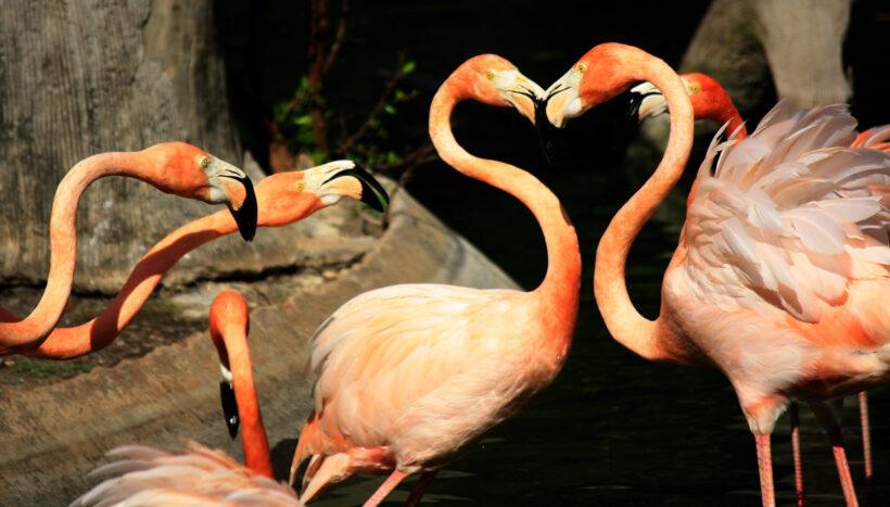 hình ảnh chim hồng hạc hình trái tim lãng mạn