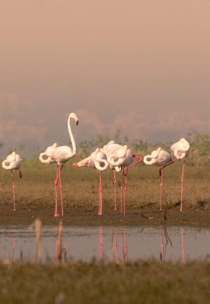hình ảnh chim hồng hạc tạo kiểu bắt mắt