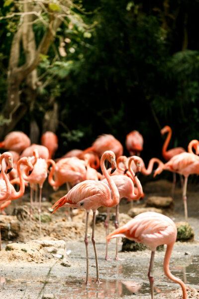 hình ảnh chim hồng hạc theo đàn cute