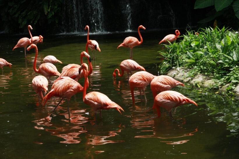 hình ảnh đàn chim hồng hạc trên con suối