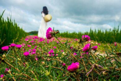 Hình ảnh hoa mười giờ và cô gái