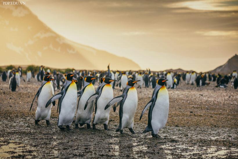 hình ảnh nền chim cánh cụt cute, sinh động nhất
