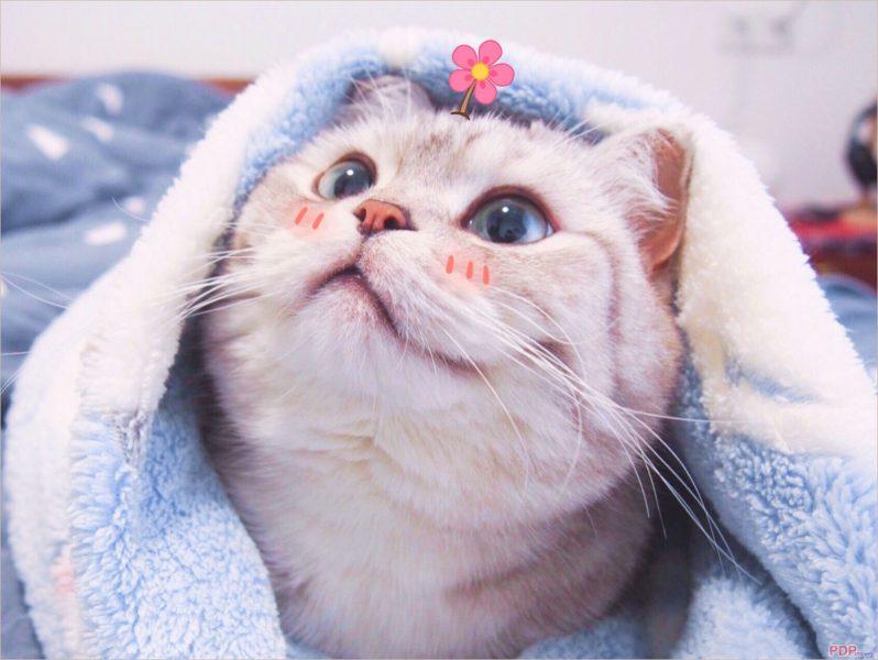 Các  Hình ảnh nền con mèo dễ thương, đẹp nhất cho điện thoại, máy tính