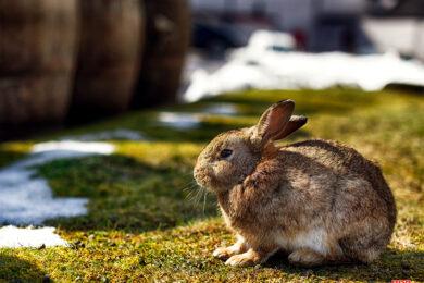 hình ảnh nền con thỏ