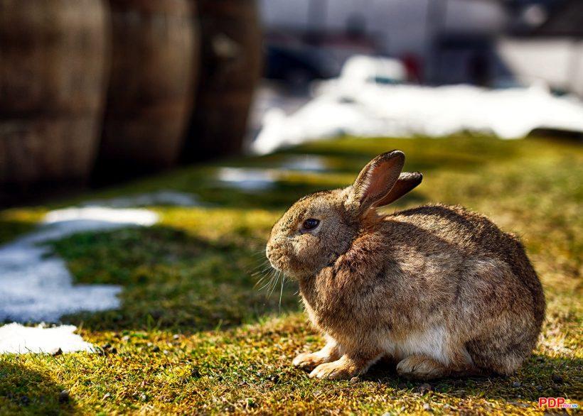 hình ảnh nền con thỏ cute, dễ thương nhất