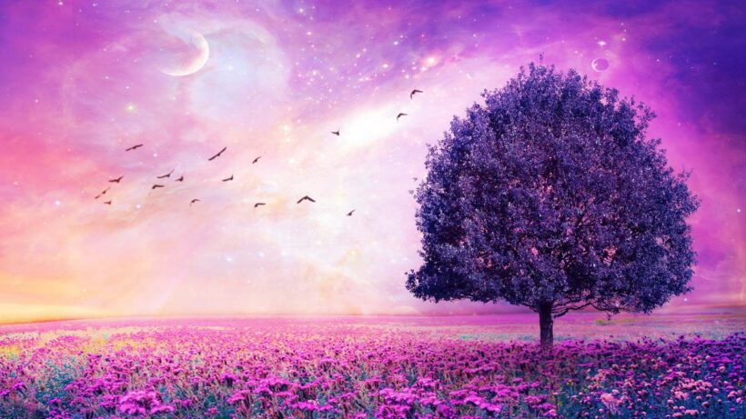 Hình nền cánh đồng hoa màu hồng dễ thương