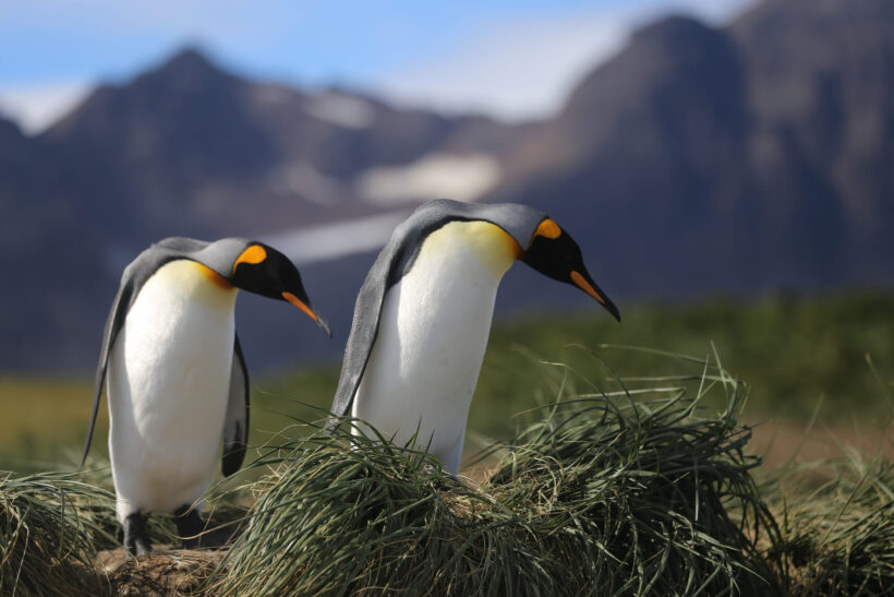 hình nền chim cánh cụt vào bờ vào mùa nắng