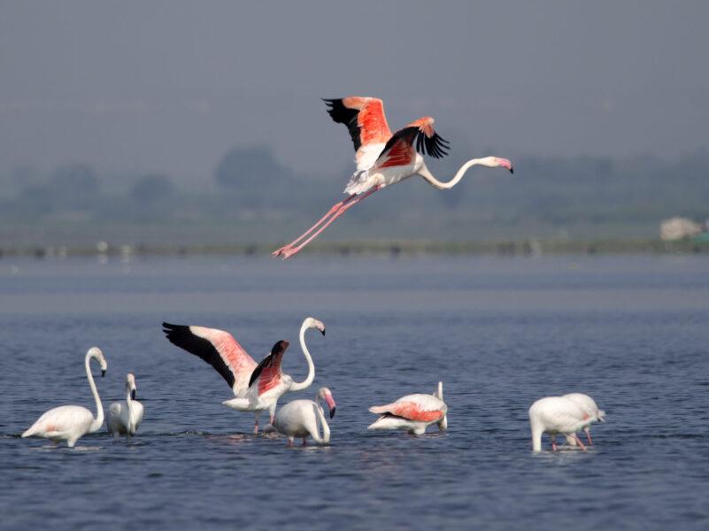 hình nền chim hồng hạc bay