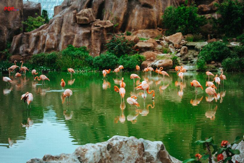hình nền đàn chim hồng hạc trên hồ nước