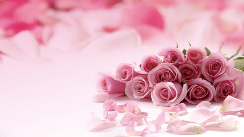 Hình nền hoa màu hồng dễ thương