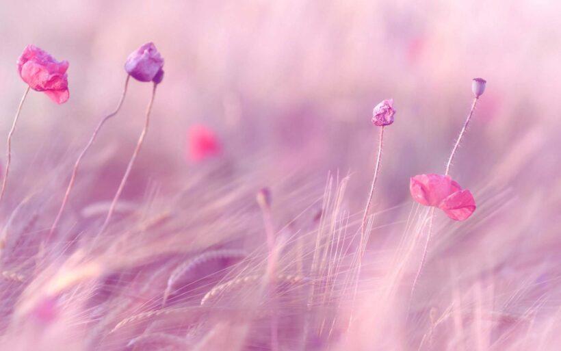 Hình nền màu hồng dễ thương, ấn tượng
