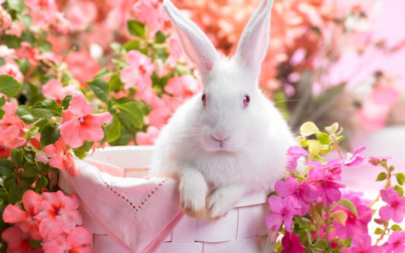 Hình nền máy tính dễ thương, ảnh chú thỏ trắng