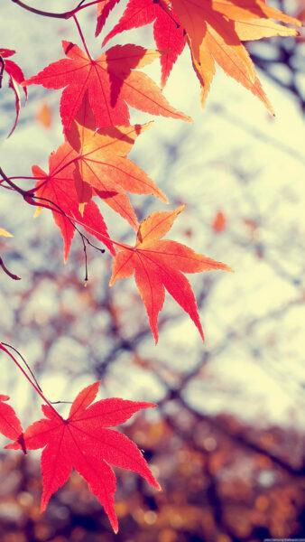 Hình nền samsung lá cây đẹp