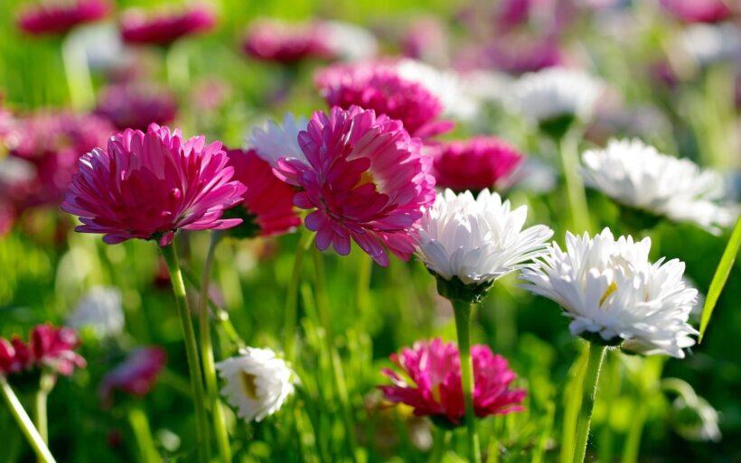 Hình nền zalo hoa cỏ mùa xuân đẹp