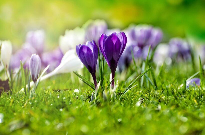 Hình nền zalo hoa tím đẹp