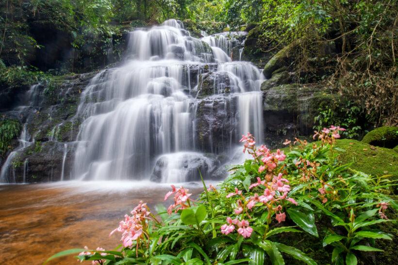 Hoa mõm chó đẹp mọc bên thác nước