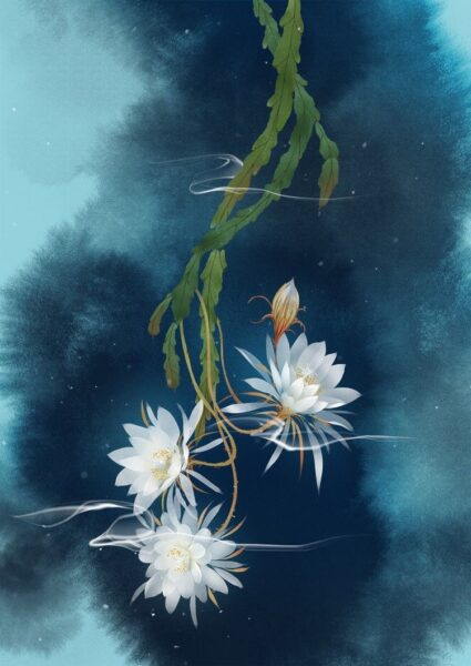 Hoa quỳnh trắng đẹp