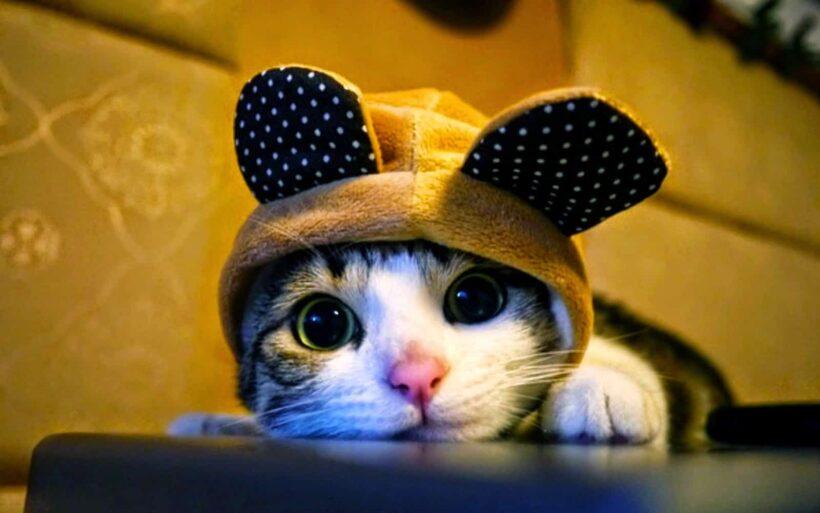 Ảnh avatar cute mèo