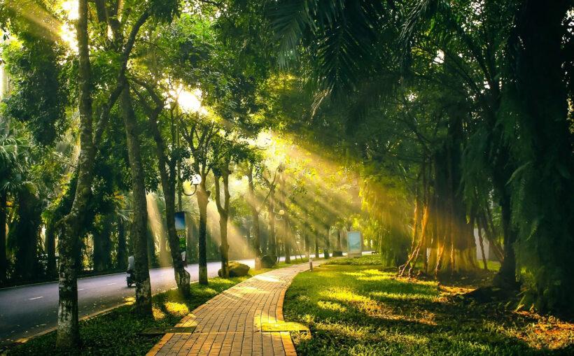 Ảnh cây xanh Hà Nội
