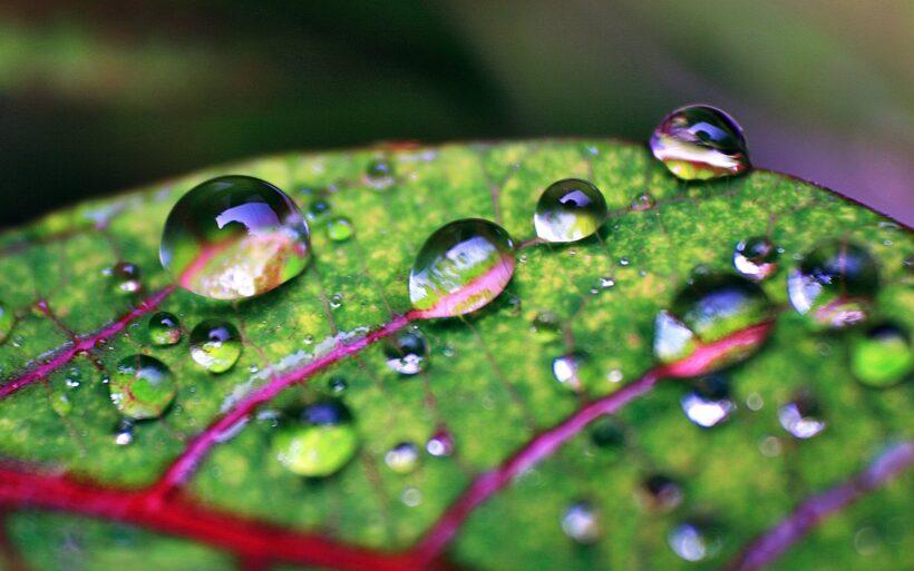 Ảnh giọt nước đọng trên lá cực đẹp