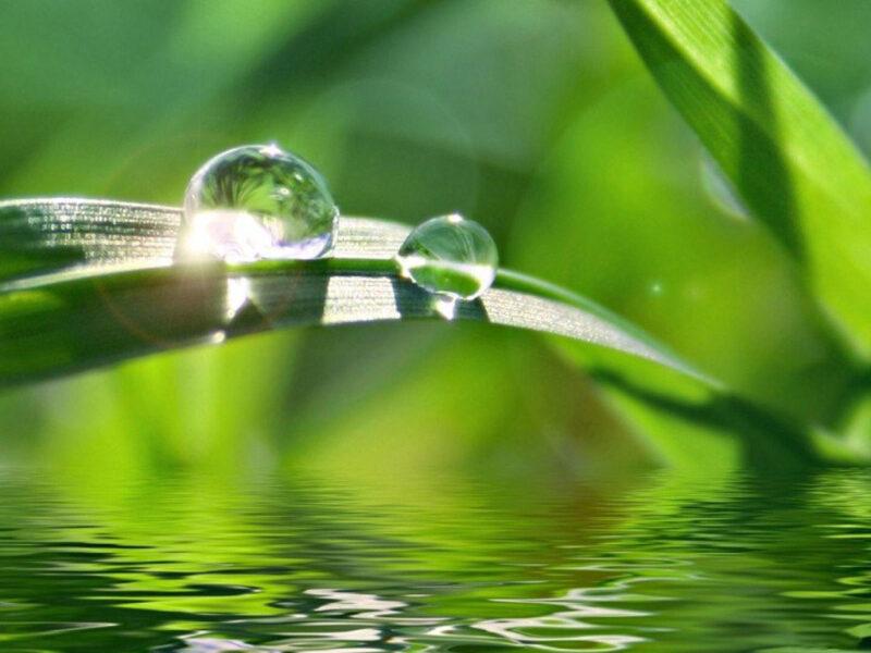 Ảnh giọt nước đọng trên lá phản chieecus ánh nắng mặt trời cực đẹp